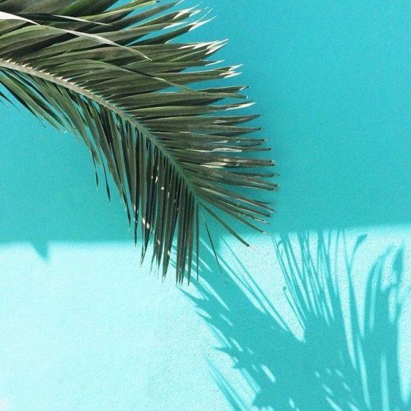 Tropical Shine - Lime da Unghie - Calenda distributore ingrosso italia (23)